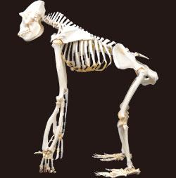 抗重力筋姿勢名張市整骨院伊賀市鍼灸腰痛肩こり