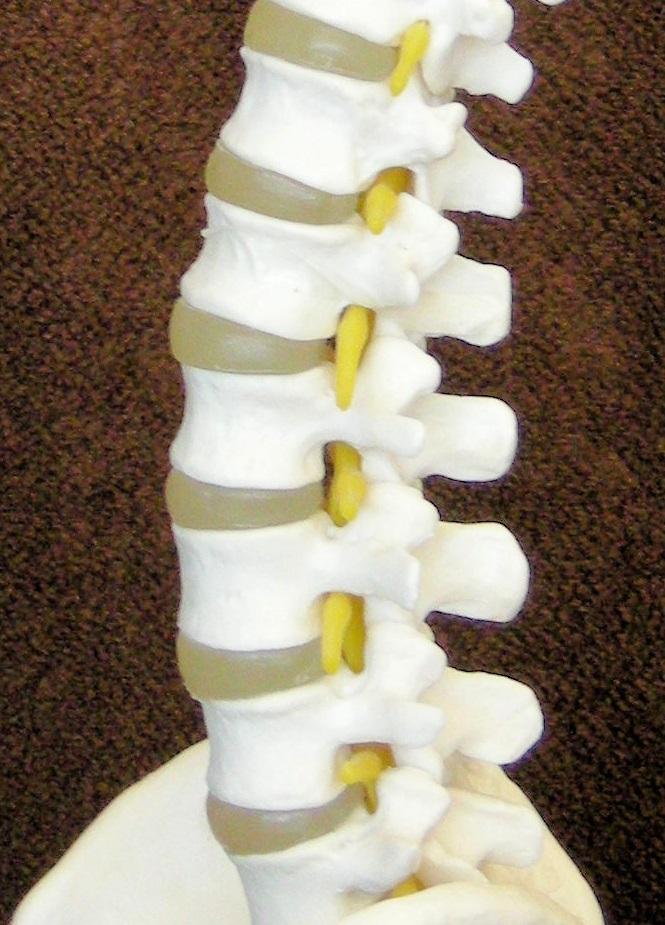 腰痛腰椎名張市整骨院伊賀市鍼灸肩こり